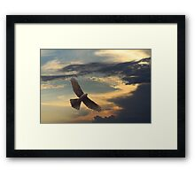 Gorgeous Goshawk Framed Print