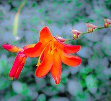 Orange star by Louise Delahunty
