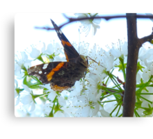 The Navy lost this Red Admiral who went AWOL Canvas Print