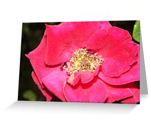 Red flower yellow center Greeting Card