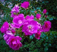 Purple blooming by Louise Delahunty