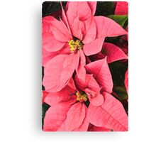 Pink Poinsettias Painting - Christmas Impressions Canvas Print