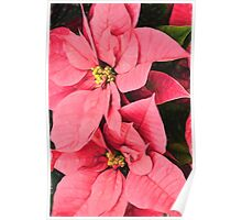 Pink Poinsettias Painting - Christmas Impressions Poster
