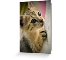 Playing Kitty Greeting Card