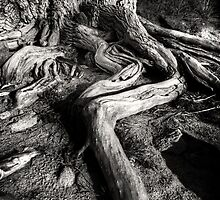 Root Out by Bob Larson