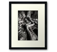 Root Out Framed Print