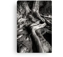 Root Out Canvas Print