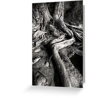 Root Out Greeting Card