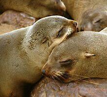 'Cuddling Cousins' - Cape Fur Seals  by Carole-Anne