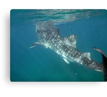 LIKE MY GILLS Canvas Print