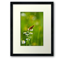 Meadow Butterfly Framed Print