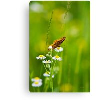 Meadow Butterfly Canvas Print