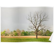 Clearing Fog - Cades Cove Poster