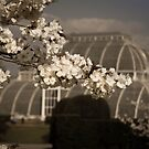 Kew In Blossom  by imagejournal