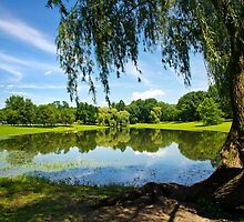 Summer in the Park Landscape by Christina Rollo
