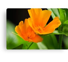 Orange Poppies Colorful Flower Art Canvas Print