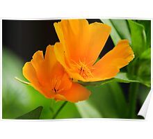 Orange Poppies Colorful Flower Art Poster