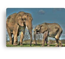 Elephants in HDR Canvas Print