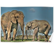 Elephants in HDR Poster