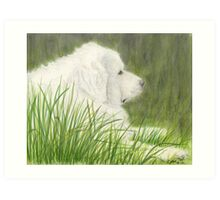 Great Pyrenees Dog Art Green Grass Cathy Peek Pets Art Print