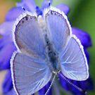 Blue On Blue by Arla M. Ruggles