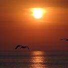 Sailing in the Setting Sun - Volando en el Sol by PtoVallartaMex