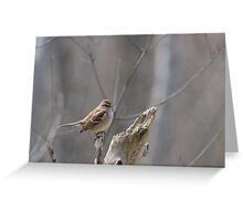 American Tree Sparrow at Dolman Ridge Greeting Card