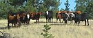 ...the posse was waiting at the edge of town..... by Christine Ford