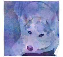 Water Color Husky Poster