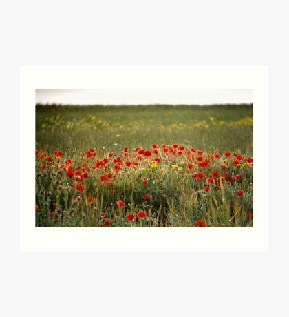 Field Of Hazy Poppies Art Print
