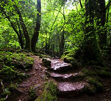 Puzzle Wood Path by Nigel Bangert