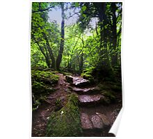 Puzzle Wood Path Poster