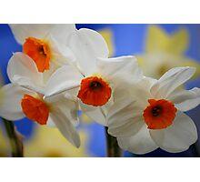 Spring! Photographic Print