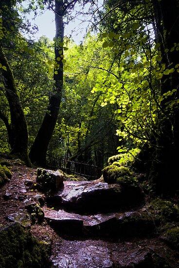 Puzzle Wood Path by Nigel Bangert