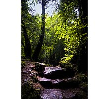 Puzzle Wood Path Photographic Print