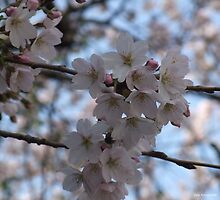 BLOSSOM TIME by Gea Austen