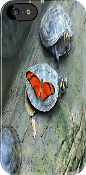 Butterfly and Turtle by Carol Bock