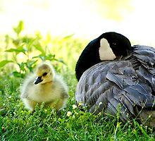 Goose Down... by Karen  Helgesen