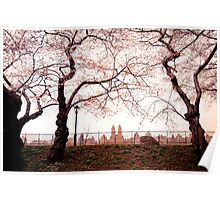 Cherry Blossoms - Central Park Reservoir - New York City Poster