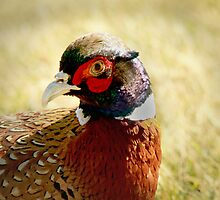 Pheasant Running Free by Corri Gryting Gutzman