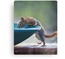 """Hmmm ~ Drinking Fountain Or Squirrel Pool ?"" Canvas Print"