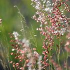 Wild Grass by TheaShutterbug