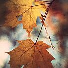 Autumn Leaves by JOSEPHMAZZUCCO