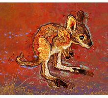 Kangaroo Joey Photographic Print