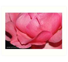 macro flora 018 Art Print