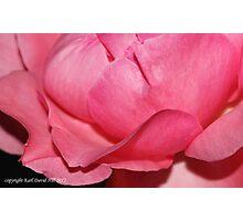macro flora 018 Photographic Print