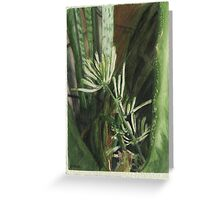 Blooming Snake Plant (Sansevieria trifasciata ) Greeting Card