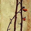 Winter berries by Agnes McGuinness