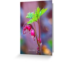 Bleeding Heart Flowers Greeting Card