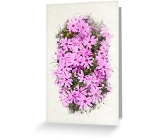 Phlox Flowers Watercolor Art Greeting Card
